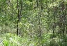 Archer Revegetation 5
